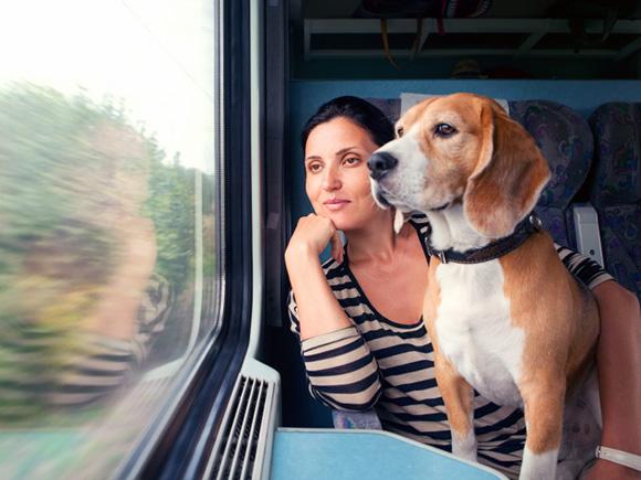 Condiciones para viajar con tu perro en el tren